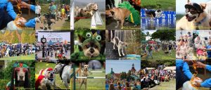 13 Famous Dog Festivals You Didn't Know