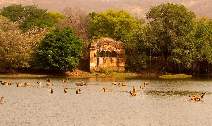 Jaipur to Ranthambore