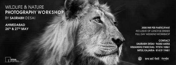 Wildlife Photography Workshop in Ahmedabad