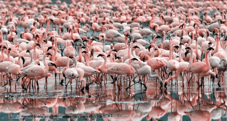 sewri flamingo point | sewri mumbai