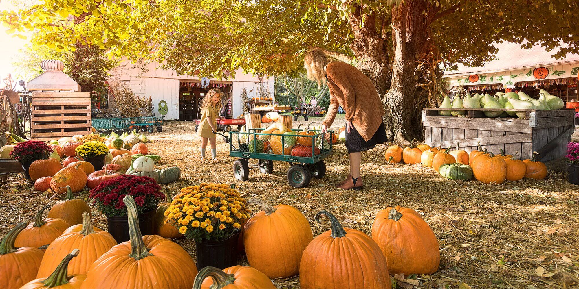 pumpkin farm fall festival | halloween in nyc