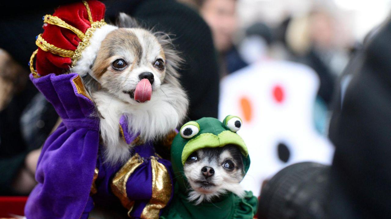 halloween dog parade nyc